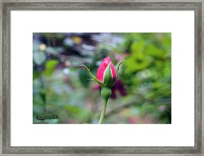 Love Blooming Framed Print