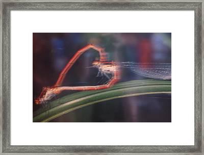 Love Bug Framed Print by Frankie Graham