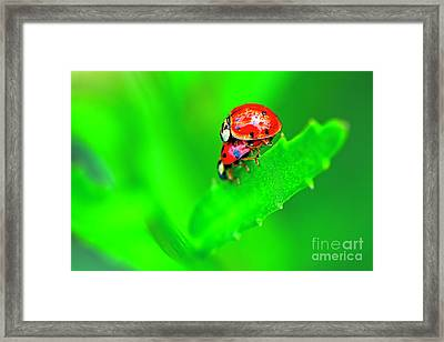 Framed Print featuring the photograph Love Bugs by Sharon Talson