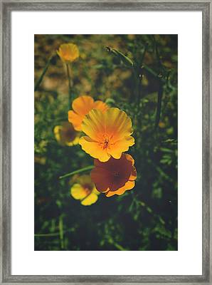 Love Comes Home Framed Print by Lucinda Walter