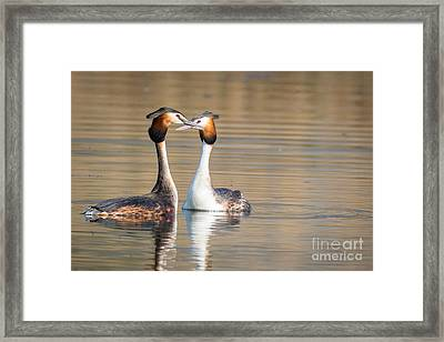 Love Couple Framed Print