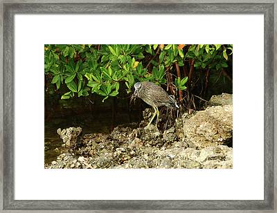 Love Crabs For Lunch Framed Print by Christiane Schulze Art And Photography