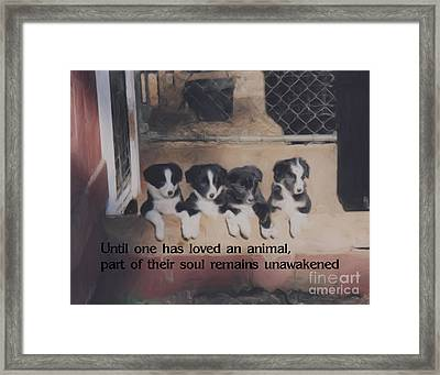 Love For Animals Framed Print