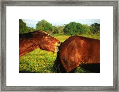 Love Hurts Framed Print by Debra Raskin
