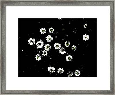 Love In A Mist Framed Print by Dan McCarthy