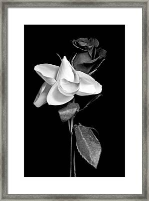 Framed Print featuring the photograph Love In Bloom by Elsa Marie Santoro