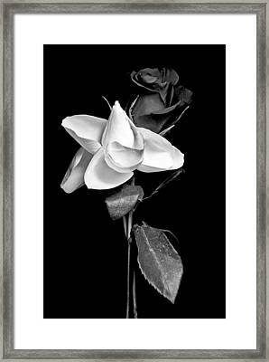 Love In Bloom Framed Print by Elsa Marie Santoro