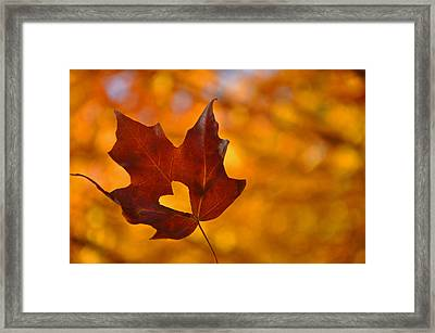 Love In Fall  Framed Print by Brittany H