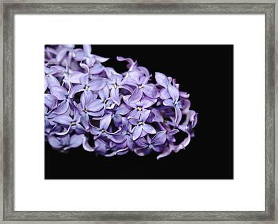 Love In Lilac Framed Print by Debbie Oppermann