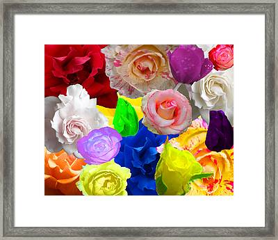 Love In Roses Framed Print by Kim