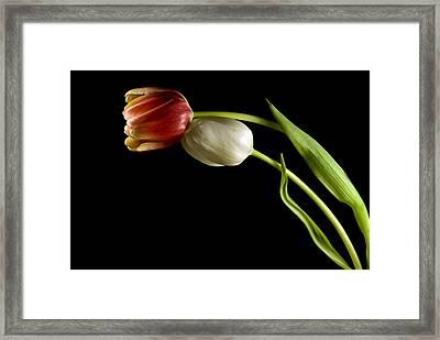 Love In Spring Framed Print by Elsa Marie Santoro
