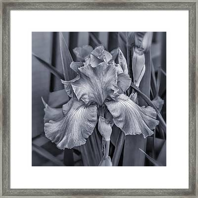 Love Is Blue Bw Framed Print