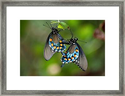 Framed Print featuring the photograph Love Is In The Air by Rick Friedle
