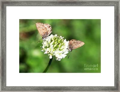 Love Moths Framed Print