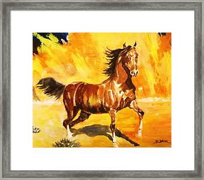 Lone Mustang Framed Print by Al Brown