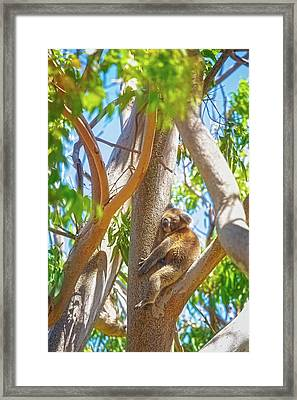 Framed Print featuring the photograph Love My Tree, Yanchep National Park by Dave Catley