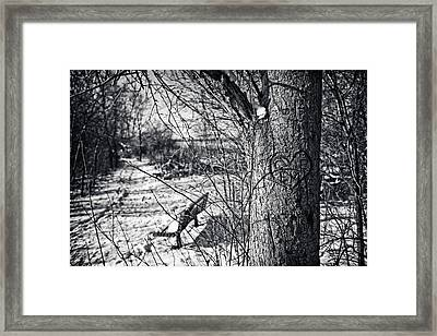 Love On A Tree Framed Print