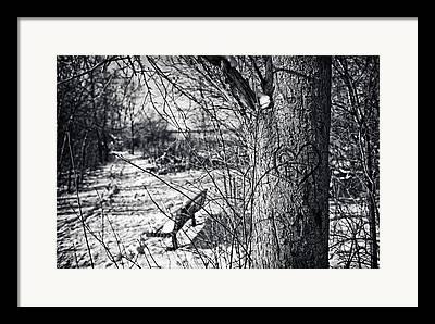 Wehr Nature Center Framed Prints