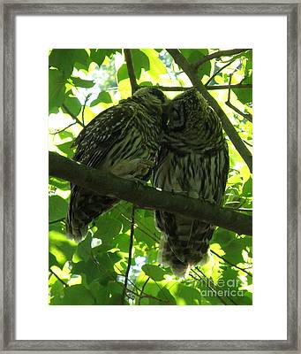 Love Owls Framed Print by Lainie Wrightson