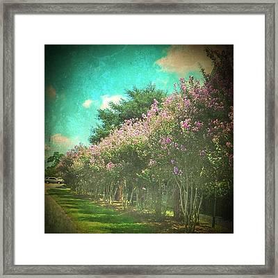 Love Purple Crepe Myrtles #allinarow Framed Print