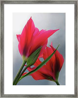 Love Framed Print by Rona Black