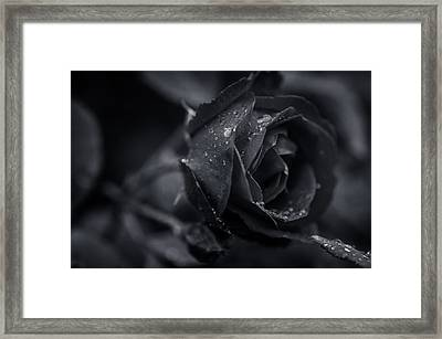 Sweet Love Roses And Water Framed Print