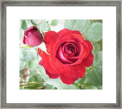 Love Roses Framed Print by Lisa Roy