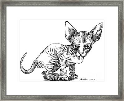 Love Sphynx Framed Print