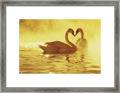 Love Swans Framed Print by Brent Black - Printscapes