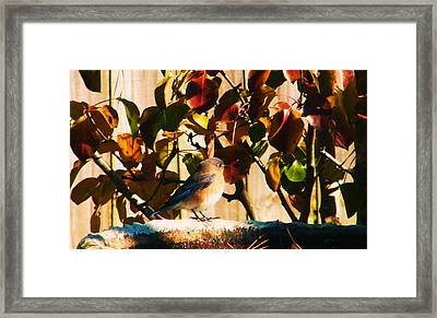Love To See You Here Colorful Bird Framed Print by Nereida Slesarchik Cedeno Wilcoxon