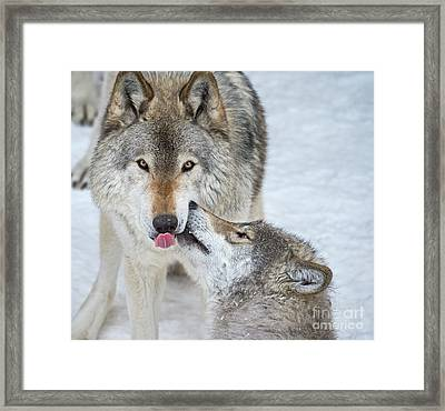 Framed Print featuring the photograph Love You Dad.. by Nina Stavlund