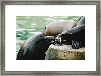 Love You Ma Framed Print by Martina Fagan