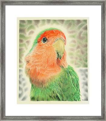 Lovebird Pilaf Framed Print