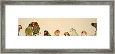 Lovebirds Framed Print