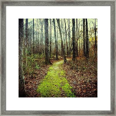 Loved This Moss Covered Path #explore Framed Print