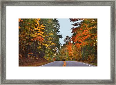 Lovely Autumn Trees Framed Print
