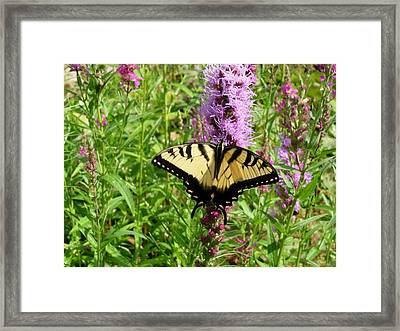 Lovely Butterfly Framed Print