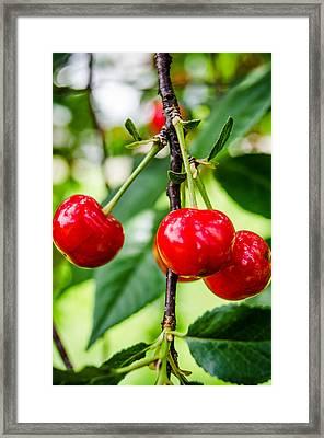 Lovely Cherries Framed Print