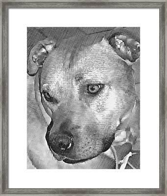 Lovely Dog Framed Print