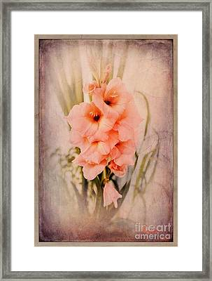 Lovely Gladiolus Framed Print
