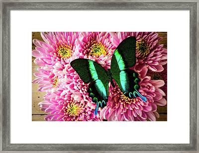 Lovely Green Blue Butterfly Framed Print
