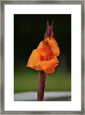 Lovely Iris Flower Framed Print