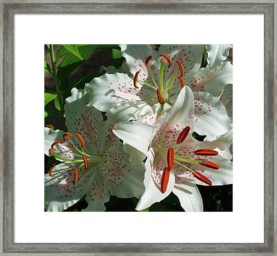 Lovely Lilies Framed Print by Anna Villarreal Garbis