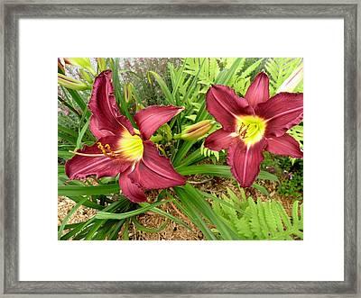 Lovely Lilies Framed Print