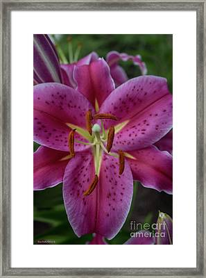 Lovely Lily Framed Print