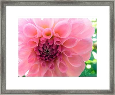 Lovely Linda Framed Print by Christine Belt