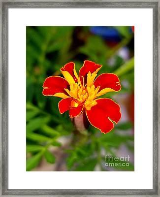 Lovely Little Flower Framed Print