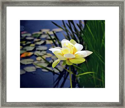 Lovely Lotus Framed Print