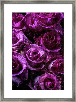 Lovely Moody Roses Framed Print by Garry Gay