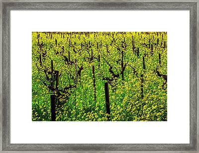 Lovely Mustard Grass Framed Print by Garry Gay